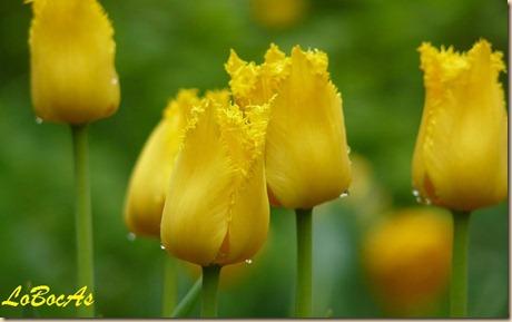 floresamarillas-LoBocAs-02