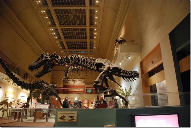 11-12-12 B Museum Of Natural History 003