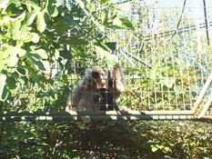 2013.08.04-040 gibbons lar