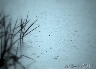 rain 010