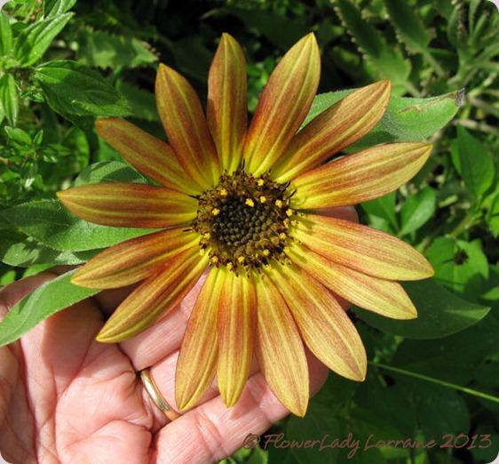 06-09-sunflower