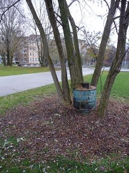 027 Träd i tunna i en park vid Gleisdreieck