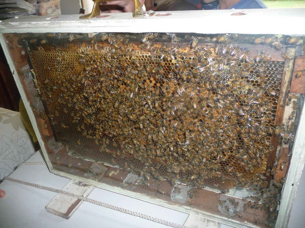 [bee%2520trip%2520009%255B4%255D.jpg]