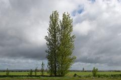130511_Bognor trees 066 ecopy2