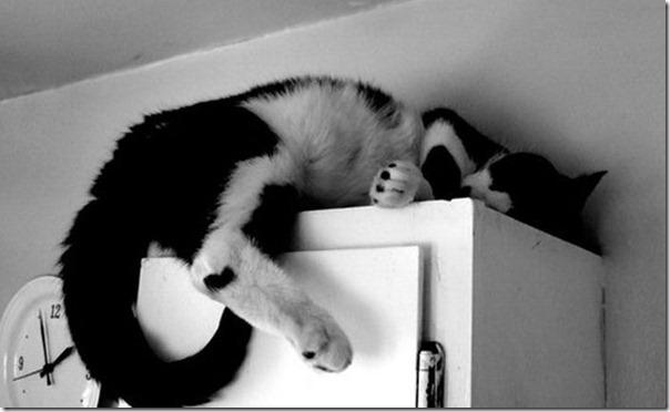 Gatos dormindo (12)