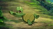 13 la tortue