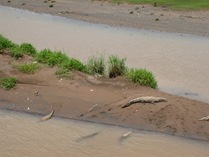 crocs-in-the-mud
