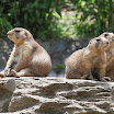 Philadelphia Zoo Prairie Dogs