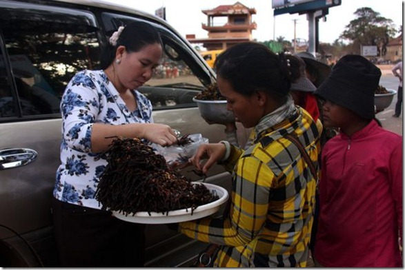 spider-food-cambodia-11