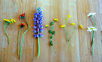 From left to right: hawk's beard, orange hawkweed, purple lupin, birdsfoot trefoil, tall buttercup, and oxeye daisy.