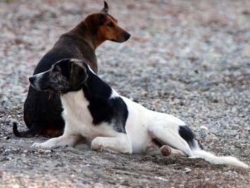 Σύλλογος Προστασίας Ζώων Κεφαλονιάς: Ναρκώνουν τα ζώα χωρίς την παρουσία γιατρού