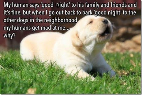 dog-thoughts-011