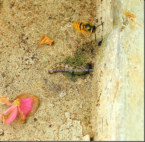 tapaja mehiläinen kala joessa 006