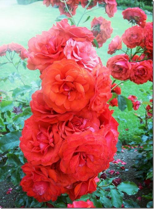 flowersC