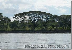 Amazonía y mineria