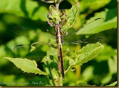 _D8C6411 June 21, 2012 NIKON D800