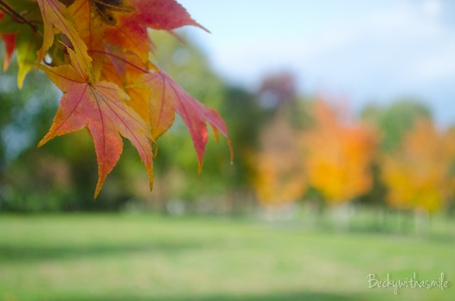 2013-10-12 Furano Fall Colors 035