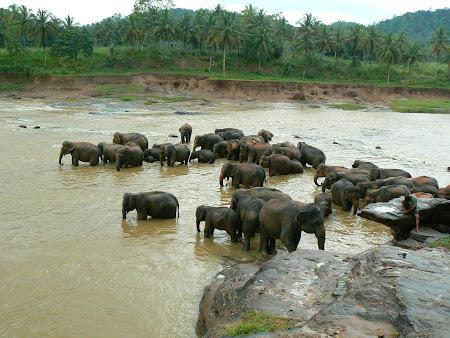 Orfelinat de elefanti Sri Lanka