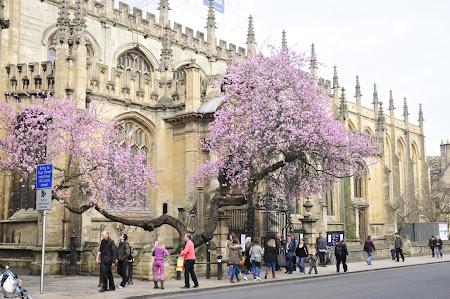 Imagini Anglia: cladirea unei Scoli Inalte Oxford