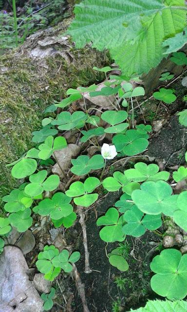 Sösdala, vacker natur, blommor, Fredriksberg