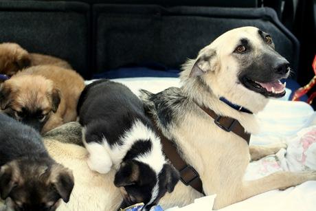 2011-julio-2-Viaje con perros abandonados. 005