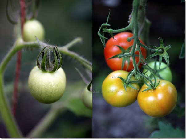 Zupa pomidorowa Billa Grangera2