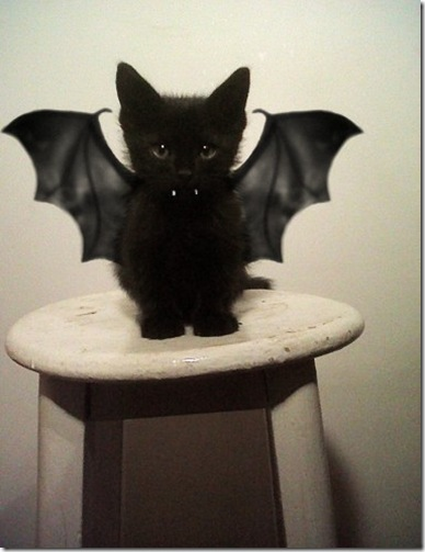 deniac_batcat