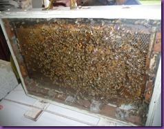 bee trip 009