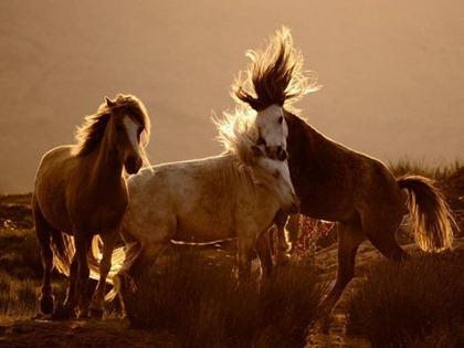 HORSES_0974Y5