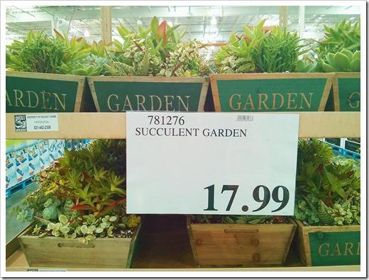 130612_SucculentGarden_Costco_11