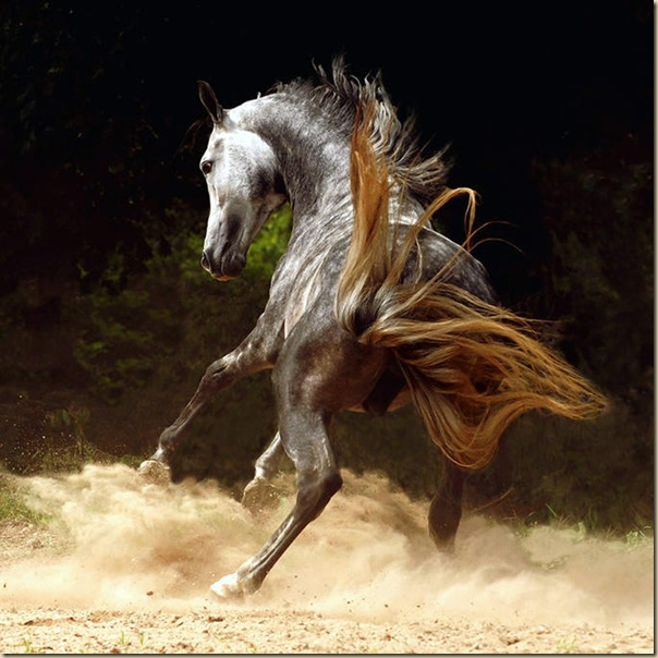 Cheval (11)