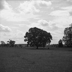 The-Tree-17