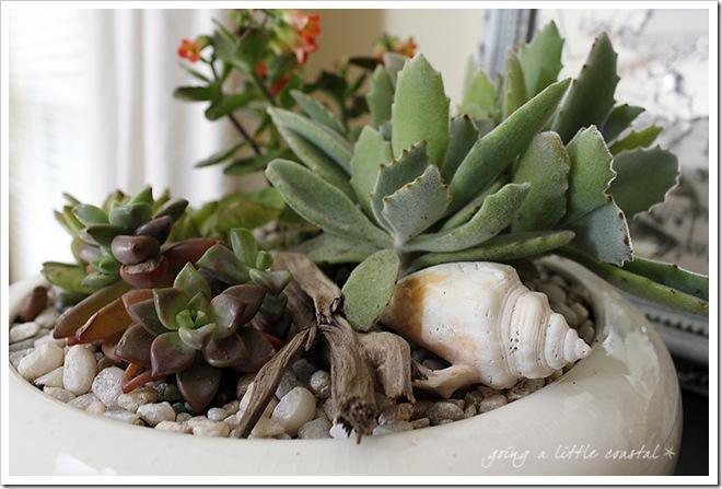 succulents2_edited-1