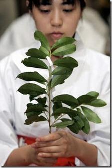Cabang-Pohon-Sakaki-Digunakan-Dalam-Kegiataan-Keagamaan