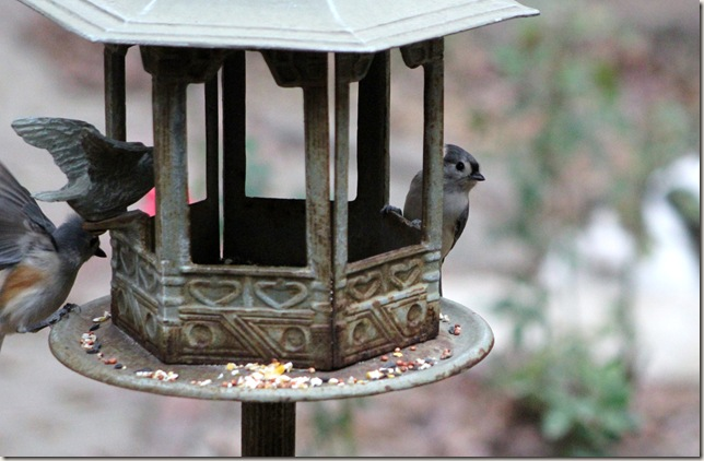 Titmouse on lookout