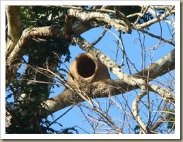 A direção da entrada do ninho é condicionada pelo clima?