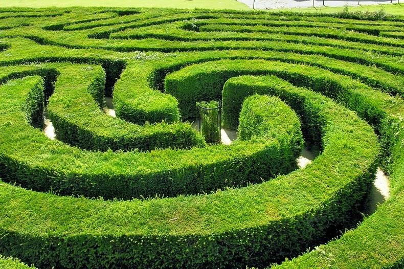 longleat-hedge-maze-4