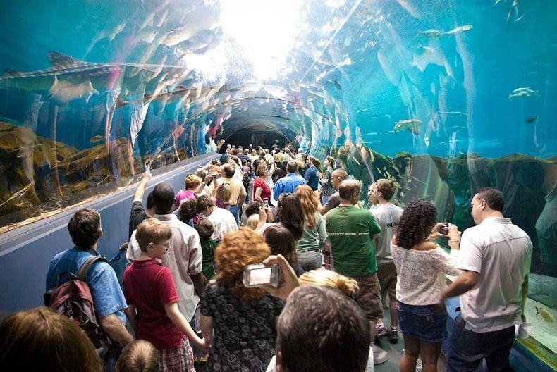 georgia-aquarium-9