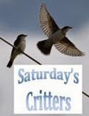 Saturday's Critters_2