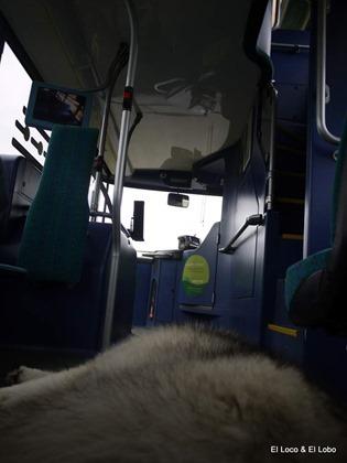 No 7 bus