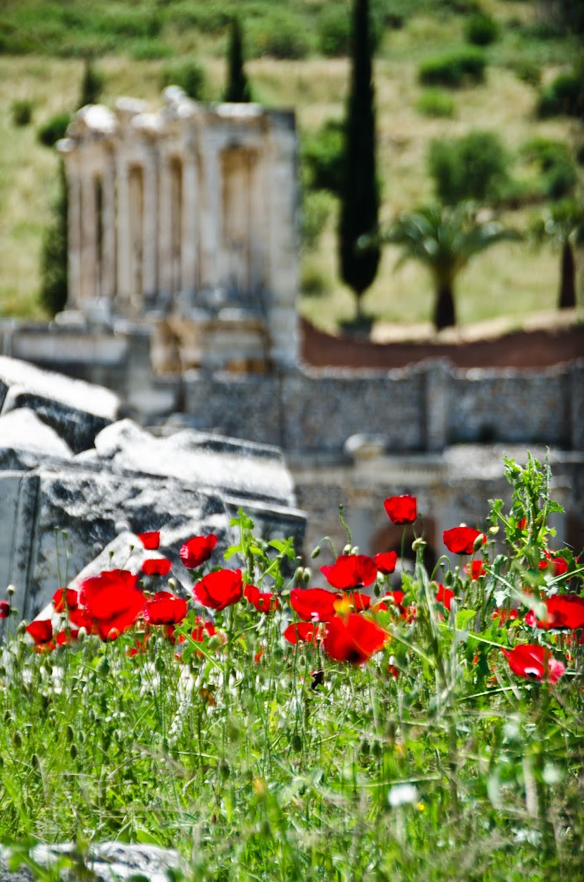 Poppies at Ephesus