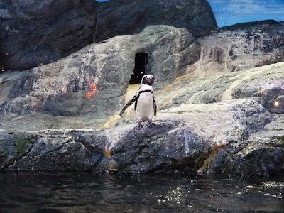 Pinguini in Thailanda