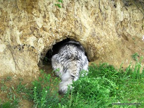 Munson checks out the boar cave