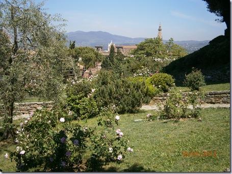 Giardino iris e rose 282