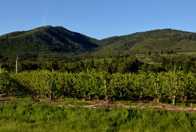 pear orchards in Medford along the 5