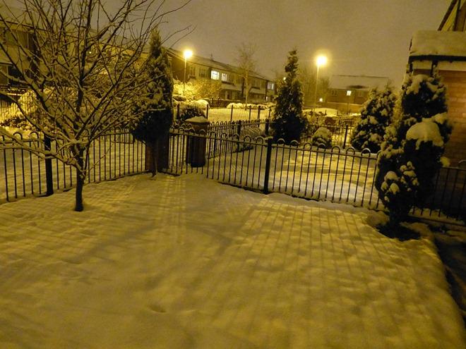 Снежный сад в ночи