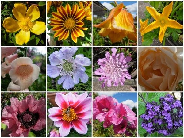 Wakehurst flowers