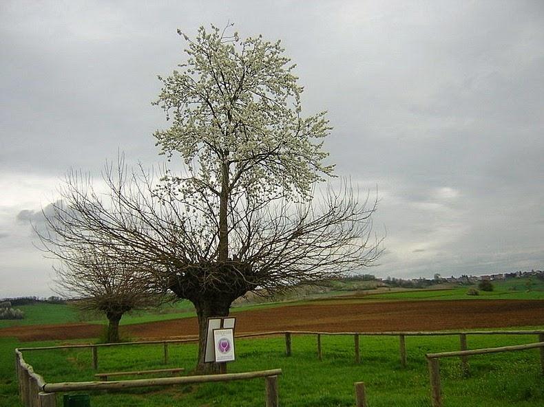 bialbero-de-casorzo-4