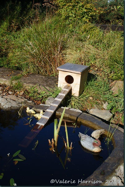 18 duck-house