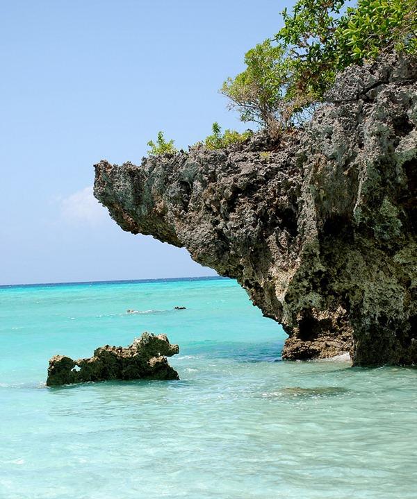 Coral and Mangrove, Zanzibar, Tanzania, East Africa 01